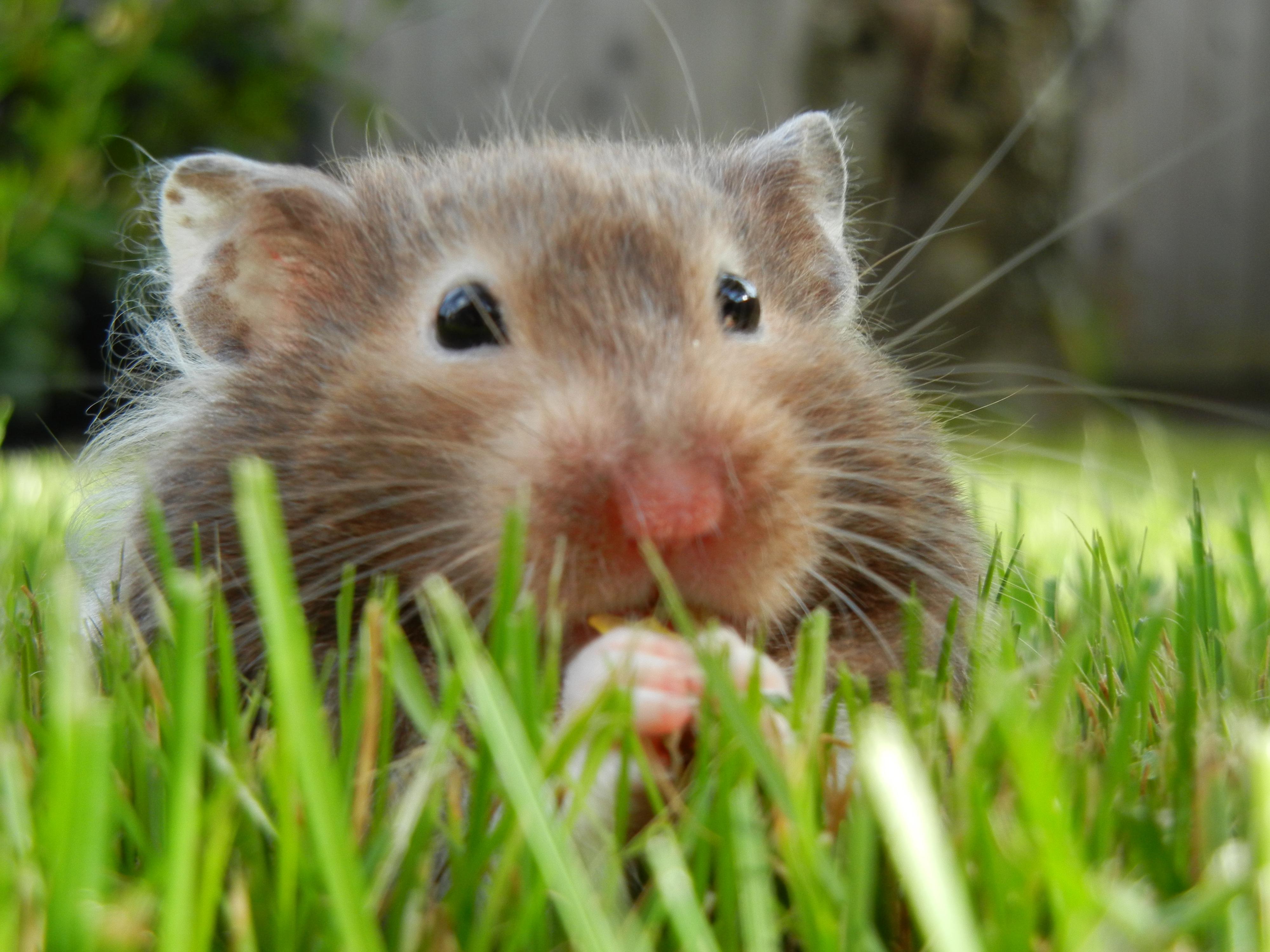 hamster spiel
